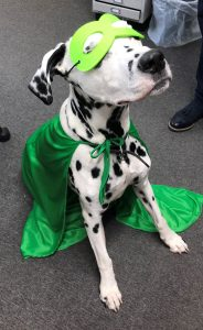 Dalmatian in superhero cape and mask